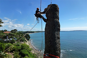 Expert Tree Climbing Arborists Auckland Wide