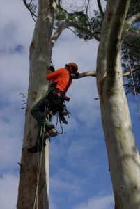 single (stationary) rope technique for Tree Climbing