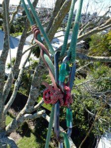 Advanced Tree Climbing Techniques
