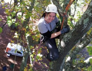 tree climbing for canopy research