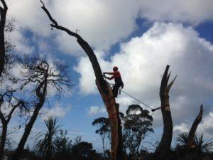 Emergency tree services professional arborist