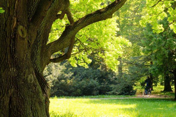 Summer Tree Care