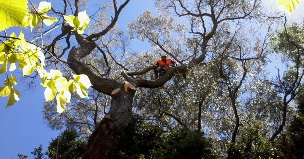 Arborists Auckland