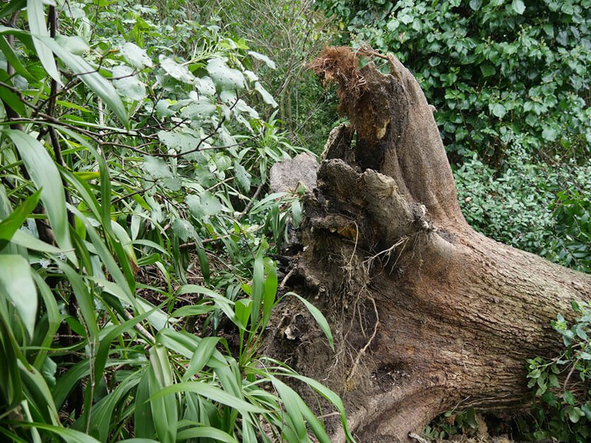 tree survey reports auckland and tree risk assessment