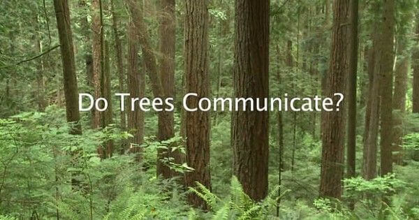 how trees communicate