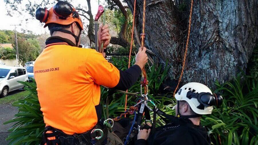 tree climbing operations