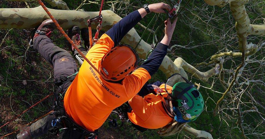Aerial Rescue Training Auckland