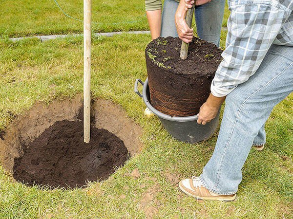 How to plant a tree NZ