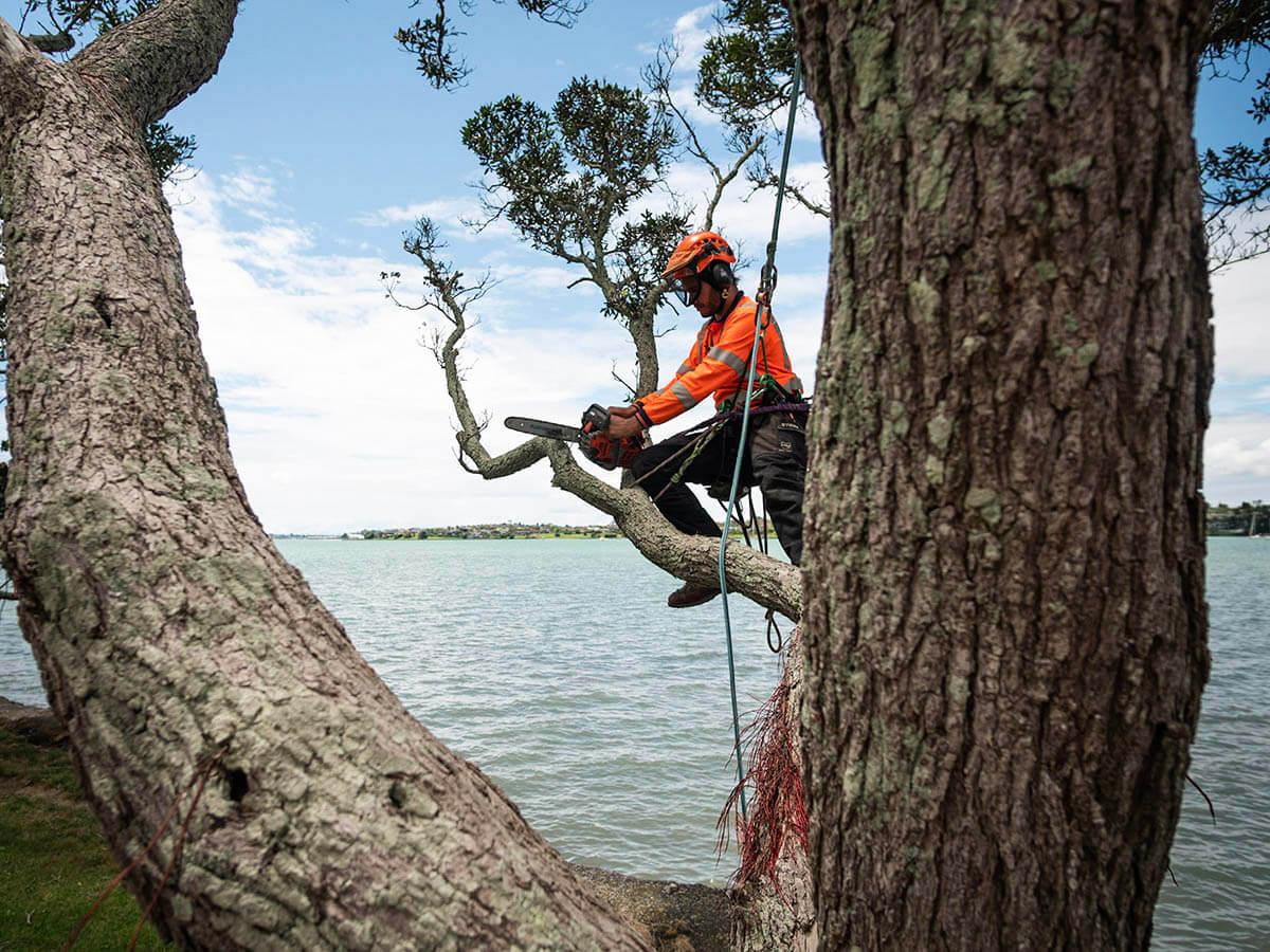 Arborist cutting a tree branch