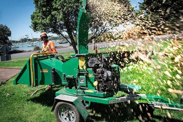 Tips for Spring Tree Care