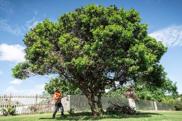 tree care tips april