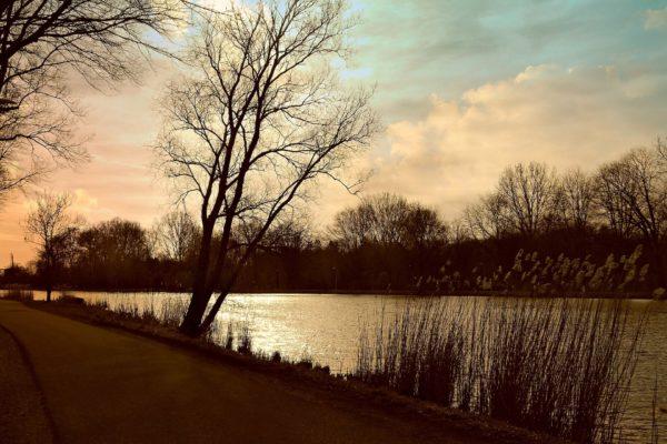 Riverbank with vegetation