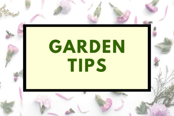Garden Tips Auckland Arborists