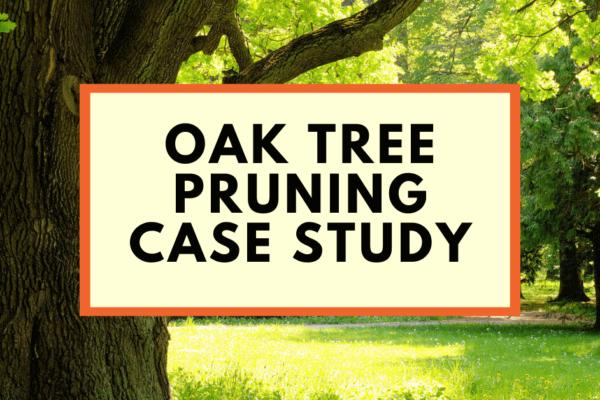 Oak tree pruning tree work