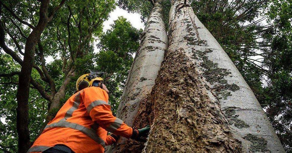Tree diseases treatment