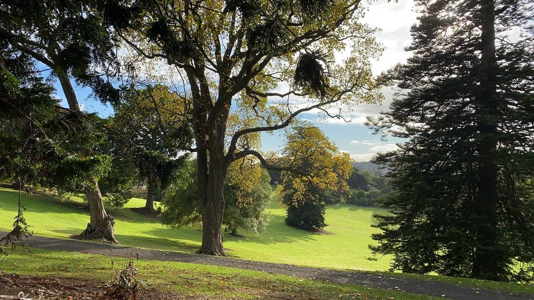 Landscape tree services
