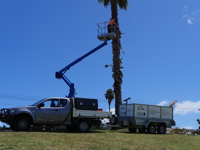 Palm tree pruning Auckland