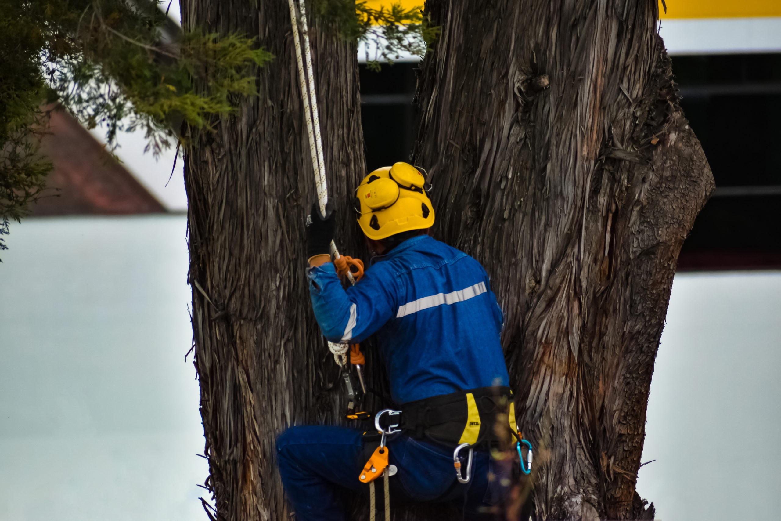 Trained Arborist