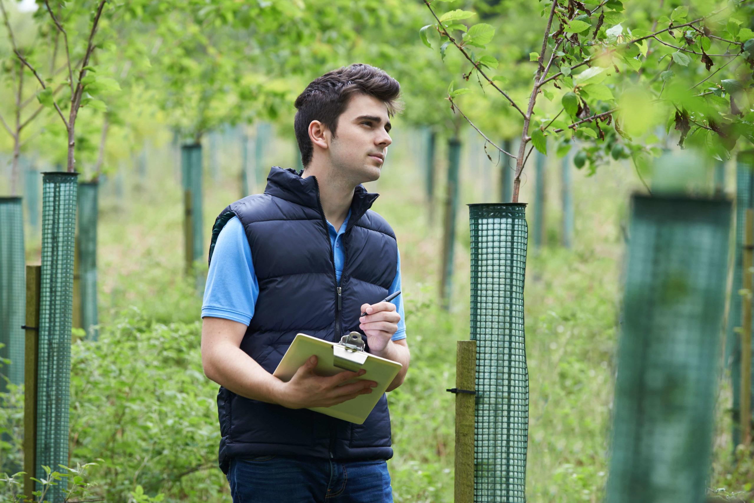 arborist career