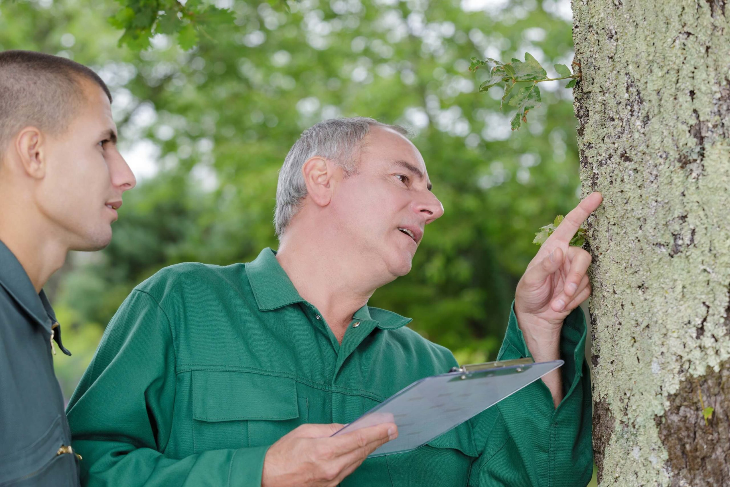 How Do You Know if a Tree is Diseased