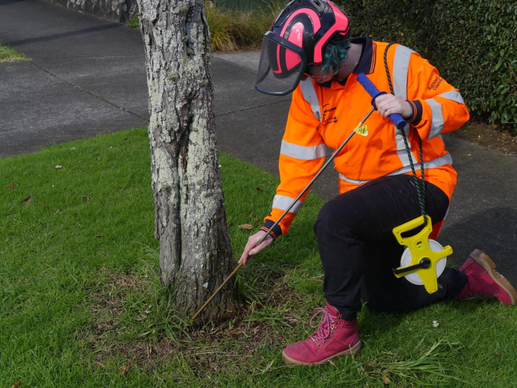 A GUIDE TO SPRING 2021 TREE CARE
