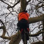 Tree Care Environment Protection