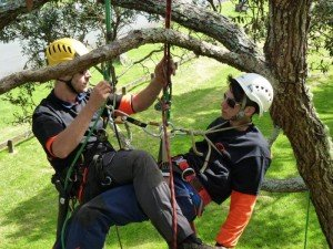 Aerial Rescue NZ for Tree Climbers and Arborist professionals