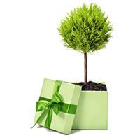 Buy a tree this Christmas for a special gift