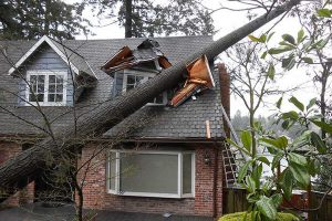 Arborist Services New Zealand Wide