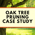 Oak tree pruning tree work