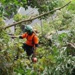 Fallen Oak Tree Crane Removal