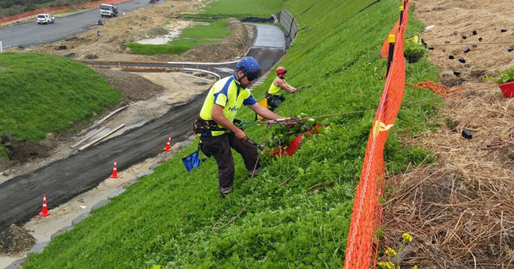 Horticultural Abseiling For Tree Planting Company