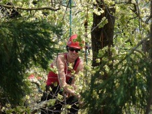 Environmental Research Tree Climbers NZ