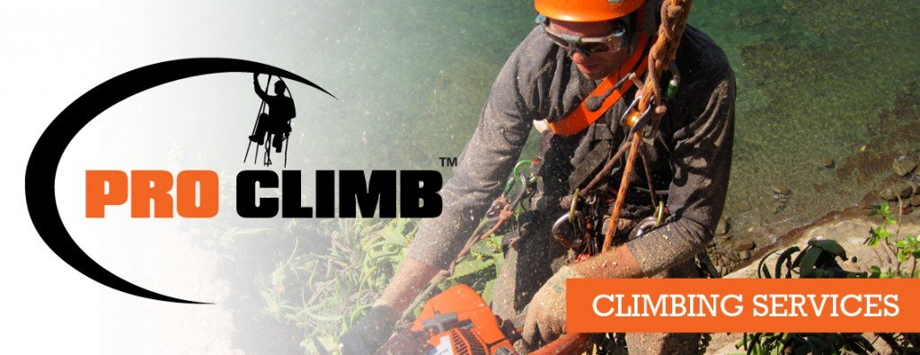 Auckland Tree Climbing Services