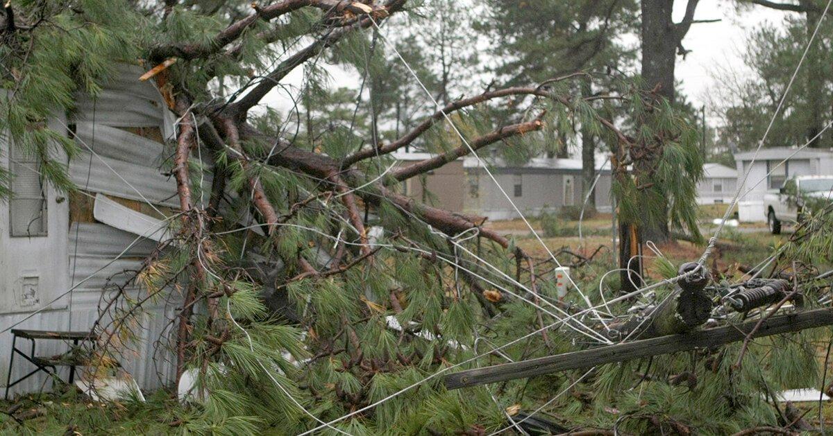 Pruning Trees Near Power Lines Regulations Advice Nz