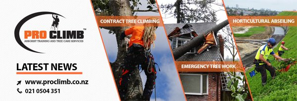 Tree Climbing Industry April 2020