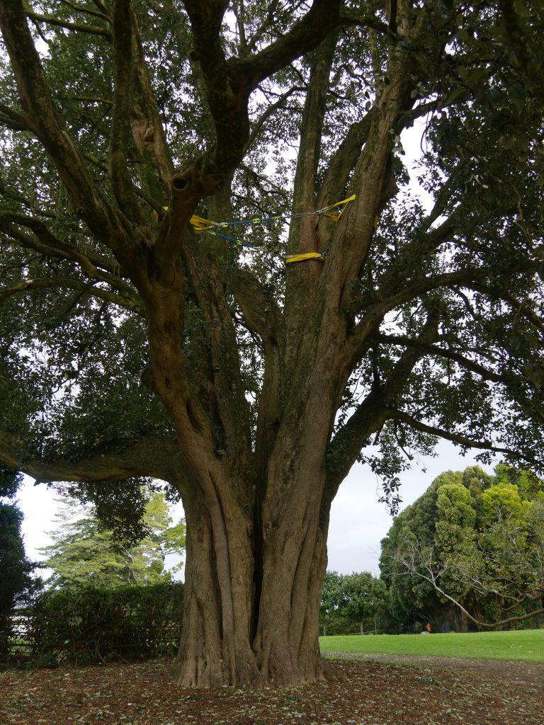 The Hibiscus Tree Post Bracing