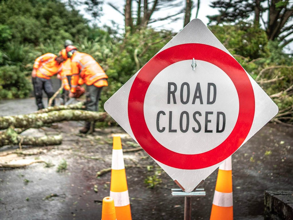 Tree services company Auckland arborist case study